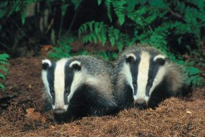 The cull in Avon: What we can do @ The Bell Inn | England | United Kingdom